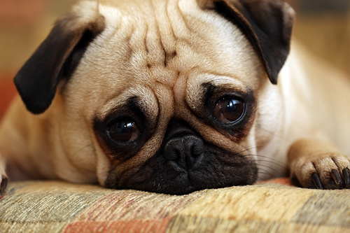 matt cutts makes puppy sad Exact Match Domains Getting A Second Look: Matt Cutts