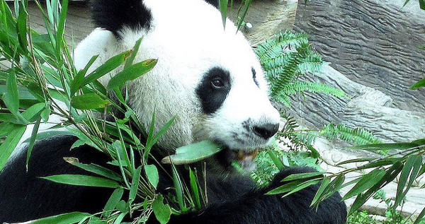 google panda penalty Google Panda & Your Link Profile