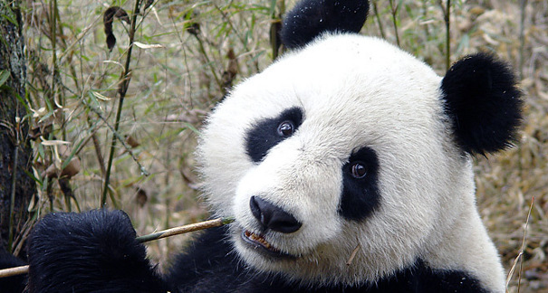 google panda update Panda Ranking Factors: A Look At 10 Search Results