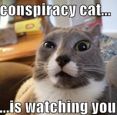 conspiracy cat Google Link Penalties, SEO Sabotage And The Great Link Conspiracy